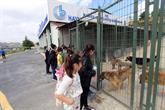 Yetişkinler Köpek Çocuklar İse Kedi Sahipleniyor