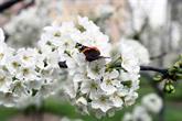 Bağcılarlılar Baharı Nostalji Bahçelerinde Karşılıyor